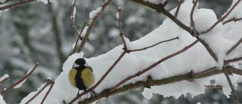 Sortie nature : Les oiseaux hivernants du lac de Sedan Sedan