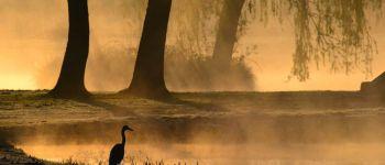 Sortie nature, jeu de piste : Les oiseaux de la forêt Sedan