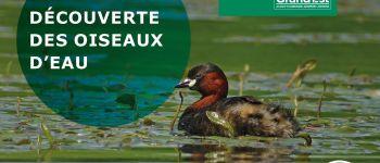 Sortie Nature - Découverte des oiseaux d\eau Petit-Mesnil
