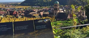 Visite Guidée - Sur la piste de la langue alsacienne Kaysersberg Vignoble