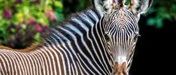 Journée découverte au zoo de Mulhouse Mulhouse