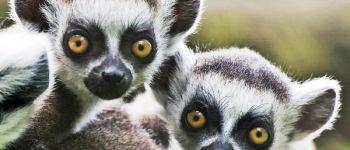 Le zoo : protéger plutôt qu\exhiber Mulhouse