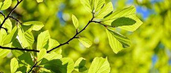 SORTIE NATURE : IMPRESSION VÉGÉTALE Belles-Forêts